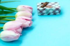 在蓝色背景的桃红色郁金香与礼物盒 平的位置,顶视图 背景能明信片使用的华伦泰 免版税库存图片