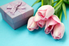 在蓝色背景的桃红色郁金香与礼物盒 平的位置,顶视图 背景能明信片使用的华伦泰 免版税库存照片