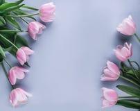 在蓝色背景的桃红色郁金香花 等待的春天 看板卡愉快的复活节 平的位置, 图库摄影