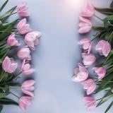 在蓝色背景的桃红色郁金香花 等待的春天 看板卡愉快的复活节 库存图片