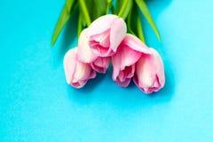 在蓝色背景的桃红色郁金香 平的位置,顶视图 背景能明信片使用的华伦泰 免版税库存图片