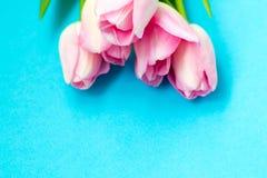 在蓝色背景的桃红色郁金香 平的位置,顶视图 背景能明信片使用的华伦泰 免版税图库摄影