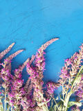 在蓝色背景的桃红色野花 免版税库存照片
