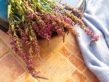 在蓝色背景的桃红色野花 库存照片