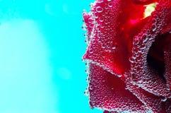 在蓝色背景的泡沫腾涌的花 免版税图库摄影