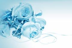 在蓝色背景的玫瑰 免版税图库摄影