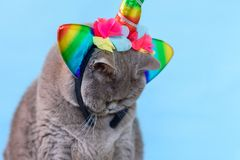 在蓝色背景的画象逗人喜爱的英国Shorthair猫独角兽 免版税库存图片
