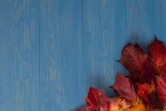 在蓝色背景的秋叶 免版税库存照片