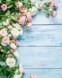 在蓝色背景的精美新鲜的玫瑰 免版税库存照片