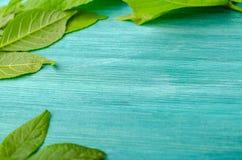 在蓝色背景的绿色叶子框架 库存照片