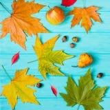 在蓝色背景的美丽的槭树叶子 免版税库存图片