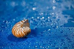 在蓝色背景的舡鱼壳与waterdrops 免版税图库摄影