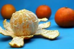 在蓝色背景的被剥皮的成熟蜜桔用橙色蜜桔 库存照片