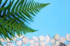 在蓝色背景的贝壳在蕨附近,热带背景,文本的地方的叶子 免版税库存图片