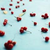 在蓝色背景的醇厚的荚莲属的植物莓果 免版税库存图片