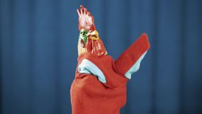 在蓝色背景的雄鸡红色布袋木偶玩具挥动,神色和弓 股票录像