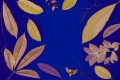 在蓝色背景的黄色叶子 橙色叶子顶视图照片 秋天树与拷贝空间的叶子框架 库存图片
