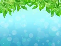 在蓝色背景的年轻人叶子 背景蒲公英充分的草甸春天黄色 夏天 Na 免版税库存图片