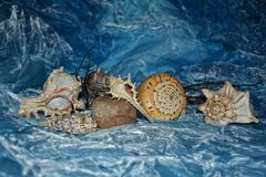 在蓝色背景的贝壳汇集 库存照片