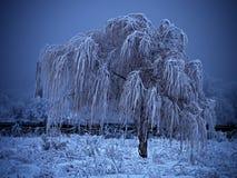 在蓝色背景的冻树 免版税库存图片