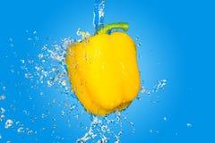 在蓝色背景的黄色胡椒飞溅 库存图片