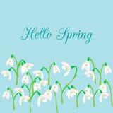 在蓝色背景的Snowdrops 春天传染媒介例证 库存图片