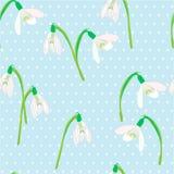 在蓝色背景的Snowdrops 春天传染媒介例证 免版税图库摄影