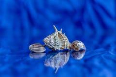在蓝色背景被弄脏的反射的海壳 免版税库存图片