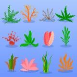 在蓝色背景设置的水下的海草传染媒介 海植物和水生海洋海藻 类型水族馆的汇集 免版税图库摄影