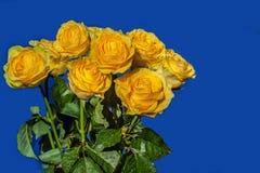 在蓝色背景隔绝的九朵黄色玫瑰 图库摄影