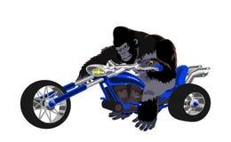 在蓝色自行车的大猩猩 免版税库存图片