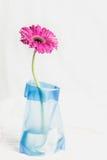 在蓝色花瓶的大丁草jamesonii唯一桃红色花 免版税库存照片