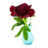 在蓝色花瓶的红色牡丹 免版税库存图片