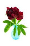 在蓝色花瓶的红色牡丹 免版税库存照片