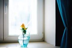 在蓝色花瓶的罗斯花在窗口附近 免版税库存照片
