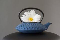 在蓝色茶罐的戴西花 库存图片