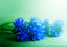 在蓝色薄雾的矢车菊 图库摄影