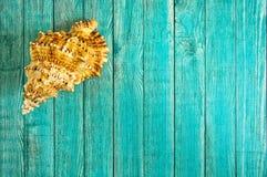 在蓝色颜色木背景的海壳  库存照片