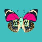 在蓝色颜色背景的蝴蝶紫色翼摘要 免版税库存照片