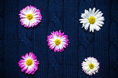 在蓝色织品与样式,自然背景,墙纸的花 库存照片