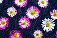 在蓝色织品与样式,自然背景,墙纸的花 免版税图库摄影
