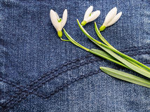 在蓝色织品的花 库存图片