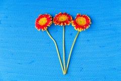 在蓝色织地不很细帆布背景的三朵大丁草雏菊花 库存照片
