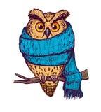 在蓝色围巾的五颜六色的桃子猫头鹰 库存图片