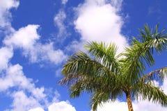 在蓝色晴朗的天空的棕榈树 免版税库存图片