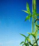 在蓝色玻璃的竹茎弄湿了 免版税库存照片