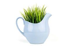 在蓝色水罐的绿草 在瓶子的草 背景查出的白色 图库摄影