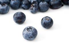 在蓝莓的选择聚焦 免版税库存照片