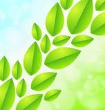 在蓝绿色背景的叶子 免版税库存图片