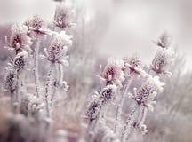 在蓟-植物名、早晨雾和霜的树冰在草甸 免版税库存照片